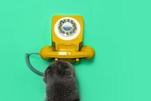 Retro Rotary Telephone And Cat...