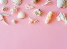 Seashells And Corals.