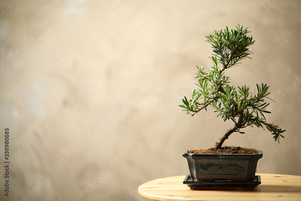 Fototapeta Japanese bonsai plant on wooden table, space for text. Creating zen atmosphere at home