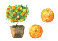 Orange Tree With Fruits In Brown Clay Pot Isolated On White Background. Watercolor Hand Drawn Illustration Of Citrus Home Tree. Clip Art For Prints, Covers, Menu, Food Design.