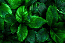 Tropical Leaves, Abstract Gree...