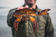 Fisherman With Fresh Rock Crab