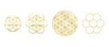 Fototapeta Kwiaty - Golden Flower of Life, Seed and Egg of Life. Geometric figures, spiritual symbols and sacred geometry. Circles forming symmetrical flower-like patterns. Illustration over white. Vector.