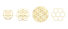 Golden Flower Of Life, Seed And Egg Of Life. Geometric Figures, Spiritual Symbols And Sacred Geometry. Circles Forming Symmetrical Flower-like Patterns. Illustration Over White. Vector.