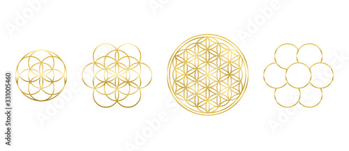 Obraz Golden Flower of Life, Seed and Egg of Life. Geometric figures, spiritual symbols and sacred geometry. Circles forming symmetrical flower-like patterns. Illustration over white. Vector. - fototapety do salonu