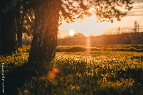 Fototapety, obrazy: sunset in the forest