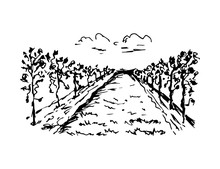 Hand-drawn Ink Vector Drawing. Vineyard Landscape, Rows Of Grape Bushes, Perspective, Clouds. Engraving Style, For Label Prints, Wine List, Countryside.
