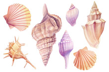 Watercolor Set Off Seashells, ...