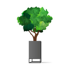 A Small Tree In A Stylish Gray Pot. Indoor Plant Isolated On A White Background. Vector Illustration.
