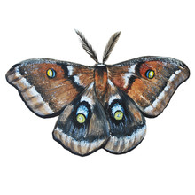 Brown Butterfly, Watercolor Il...