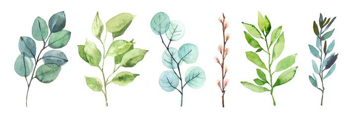 Akvarela ručno oslikana botanička ilustracija lišća i grana izolirana na bijeloj pozadini