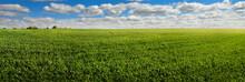 Spring Landscape Of Green Fiel...