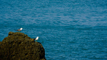 Two Seagulls Resting On A Rock
