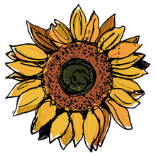 Head Of Sunflower Blossom. Yand Drawn Colorful Rough Sketch.