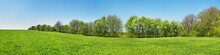 Meadow Panorama In Spring With...