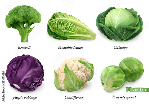 Fototapeta Cabbages and lettuce, leaf vegetables realistic food objects . Broccoli, romaine lettuce, green and purple cabbages, cauliflower, brussels sprout . 3d vector icon set obraz