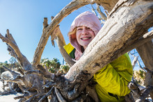 A Six Year Old Boy On A Beach Climbing Up A Driftwood Tree Trunk