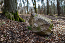 A Large Stone Covered In Moss ...