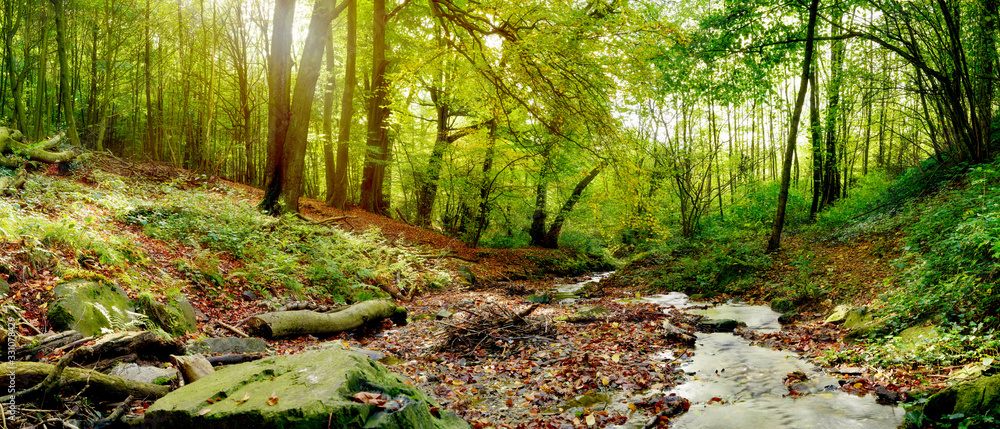 Fototapeta Forest panorama in autumn with stream and a lot of autumn leaves