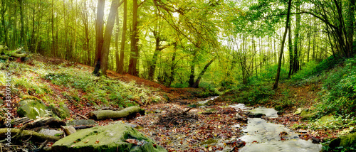 Fototapeta Forest panorama in autumn with stream and a lot of autumn leaves obraz