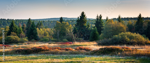 Boggy Forest with blueberry bushes in Autumn, Ore Mountains, Germany Wallpaper Mural