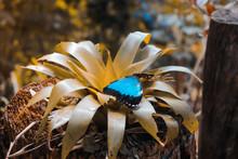 Butterfly In Wood