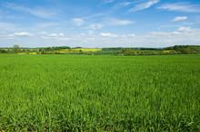 Fields In Summer, A Rural Land...