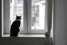 Cute Tabby Cat Sitting On A Window Sill. Selective Focus.