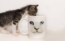 Baby Cat Drinks In A Mug Cat