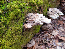 Mushrooms On Mossy Log