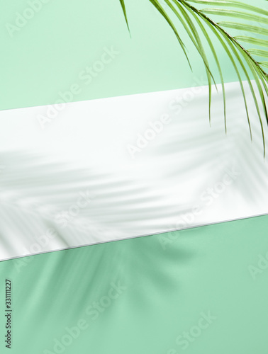 Abstract background of shadows palm leafs on green wall