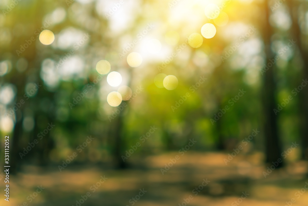 Fototapeta Blur nature bokeh green park by beach and tropical coconut trees