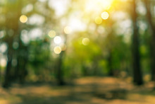 Blur Nature Bokeh Green Park B...