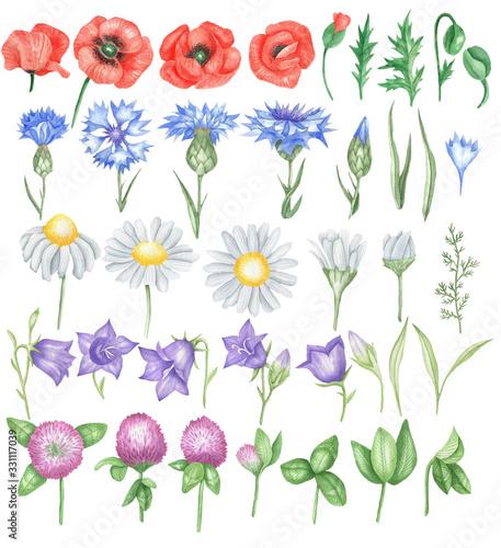 Obraz Field flowers set - fototapety do salonu