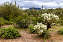 Arizona's Sonoran Desert Durin...