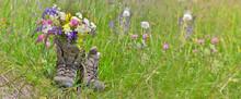 Bouquet Of Wilf Flowers In Hik...
