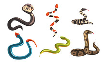 Collection Of Snakes, Poisonous And Non Toxic Snake Creatures Of Different Colors Vector Illustration