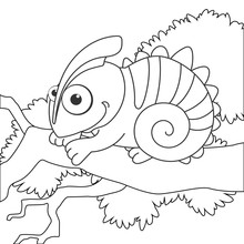 Coloring Page Outline Of Cartoon Chameleon On Branch. Page For Coloring Book Of Funny Lizard For Kids. Activity Colorless Picture About Cute Animals. Anti-stress Page For Child. Black And White Vector