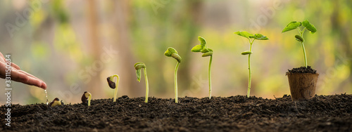 Foto hand nurturing and watering young baby plants growing in germination sequence on fertile soil with morning light green nature bokeh background