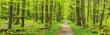 canvas print picture - Frühling im Nationalpark Hainich, Wanderweg windet sich durch grünen Wald, Thüringen, Deutschland