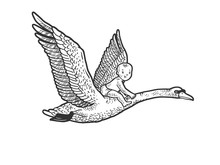 Baby Flying By Swan Sketch Eng...