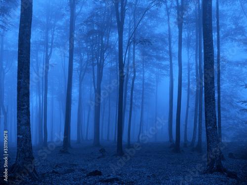 azul bosque árboles niebla IMG_4134-as20 Canvas Print