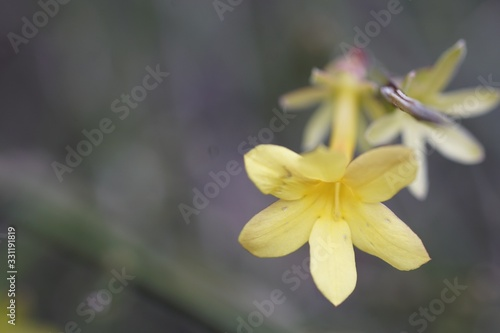 Closeup shot of a yellow flower with stamens