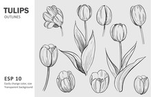 Sketch Of Tulips. Hand Drawn O...