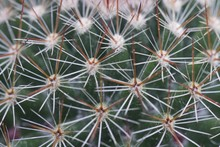 Closeup Shot Of A Cactus With ...