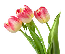 Beautiful Tulips Bouquet Isola...