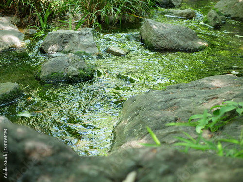 A photo where you can feel the babbling brook Canvas Print