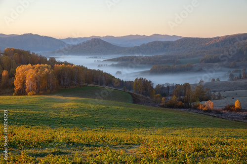 Obraz The morning sun illuminates the field and forest. Fog in a mountain valley. Altai. - fototapety do salonu