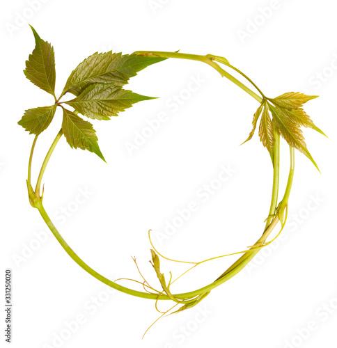 Fototapeta Circle frame from wild grape isolated on white background obraz