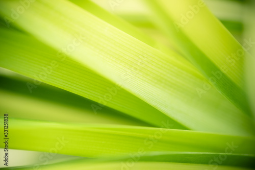 Amazing nature view of green leaf on blurred greenery background in garden and sunlight with copy space using as background natural green plants landscape, ecology, fresh wallpaper concept. #331251838